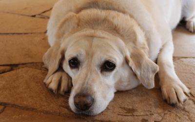 """Übergewicht: """"Wenn dein Hund abnehmen soll, muss er ordentlich fressen!"""""""
