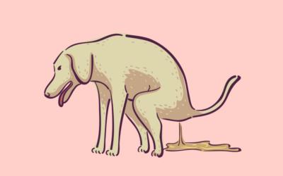 Durchfall bei Hunden