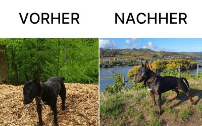 Die Geschichte von Miniatur Bullterrier Cruizer – Happy End nach langem Leidensweg