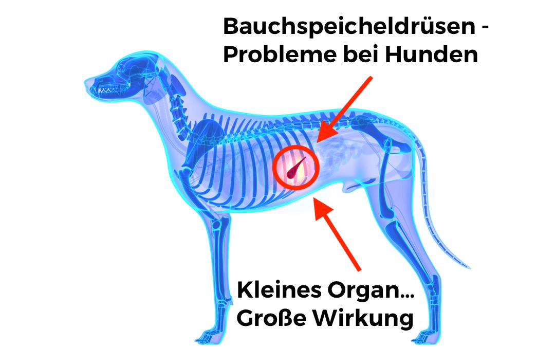 Bauchspeicheldrüsen – Probleme bei Hunden